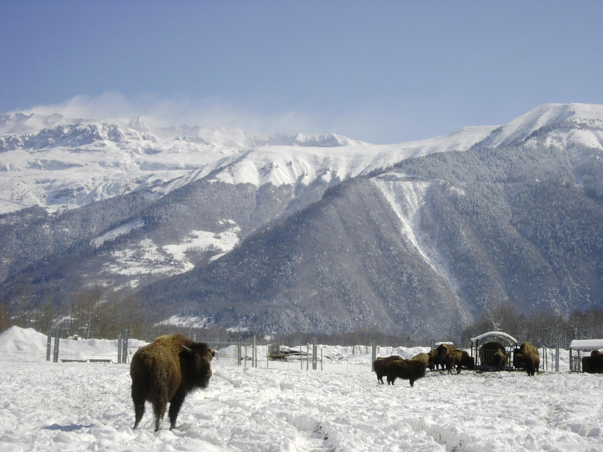 La ferme des Bisons de l'Oisans