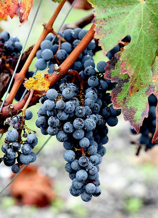 203-explorez-vignoble-chateau-leognan.jpg