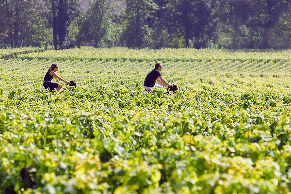 964-chateau-belloy-vino-velo.jpg