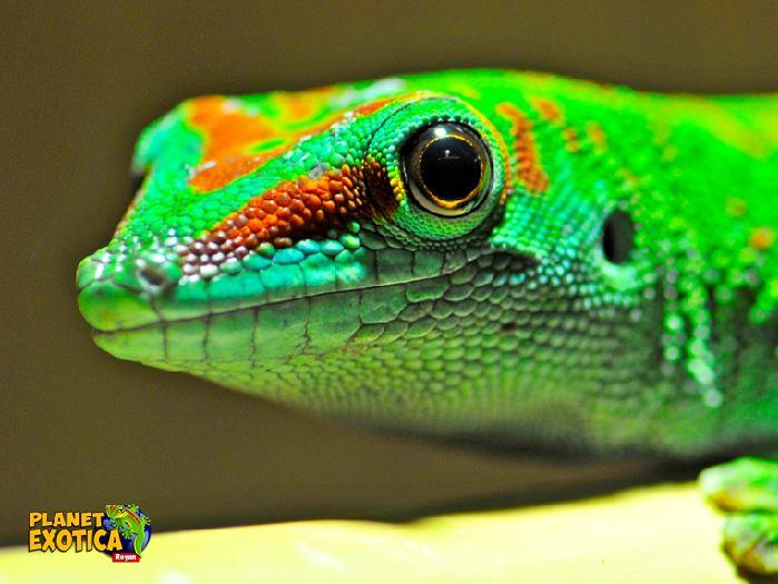 planete-exotica-royan-reptile.jpg
