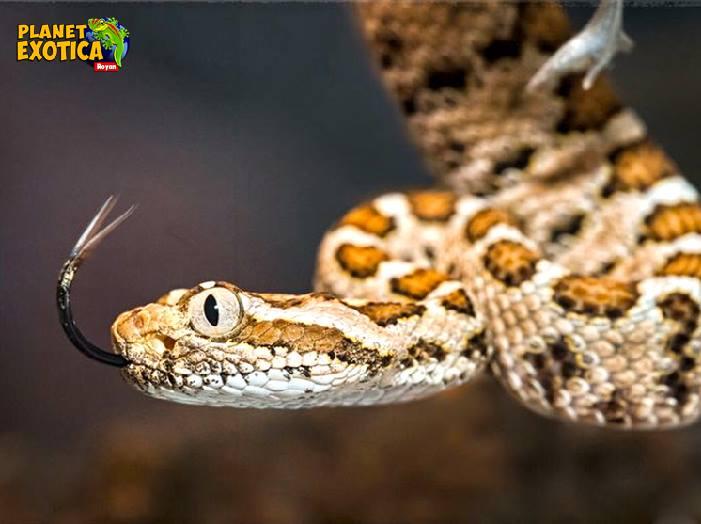 planete-exotica-royan-serpent-2.jpg