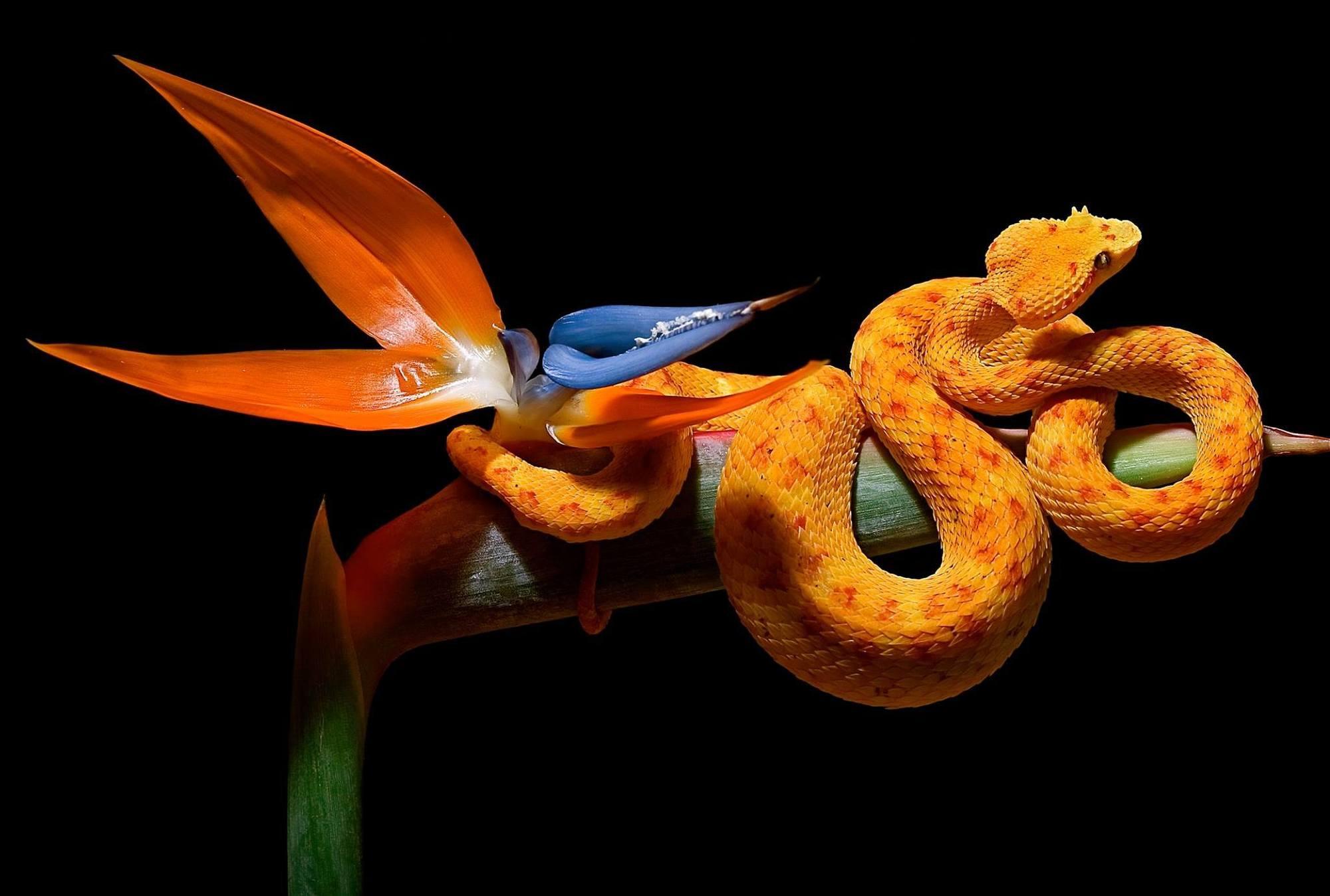 planete-exotica-royan-serpent.jpg