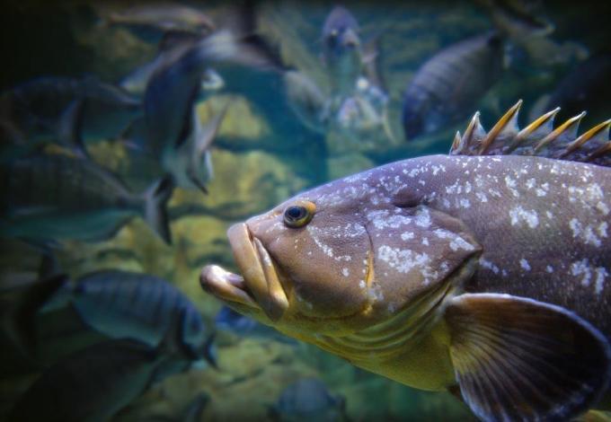 aquarium-de-paris-merou.jpg