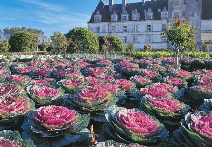 85-chateau-jardins-villandry-potager-choux-hd-(2).jpg