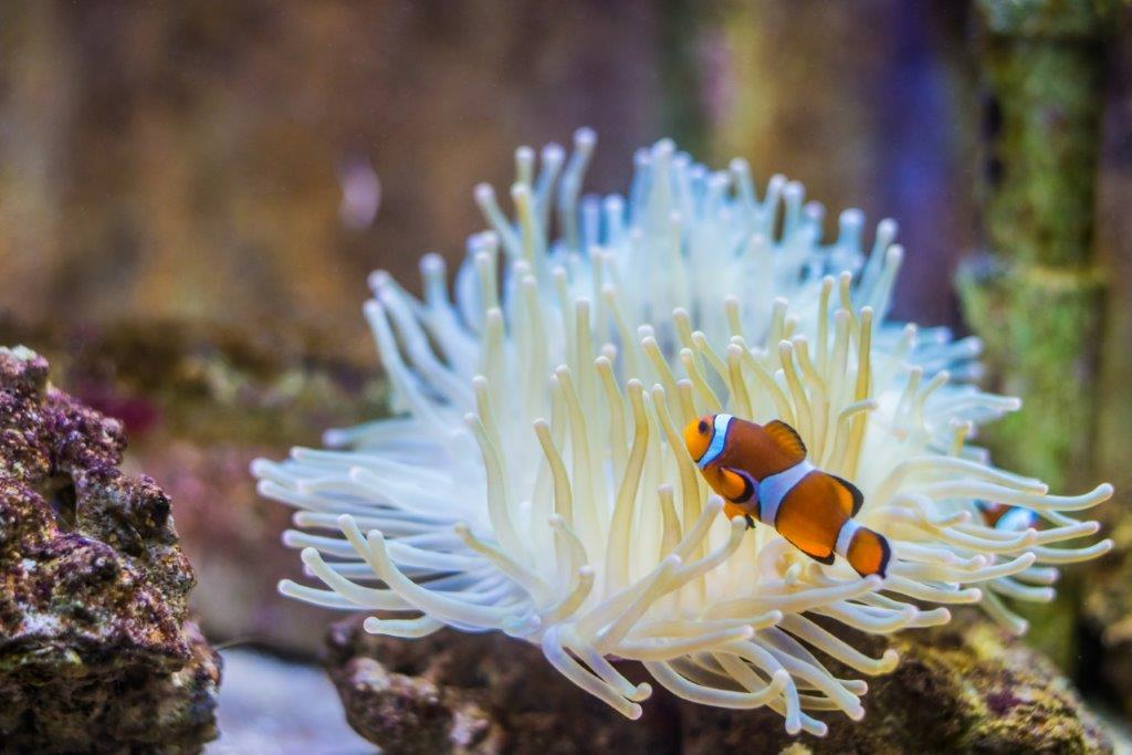 107-anemone-et-poisson-clown.jpg
