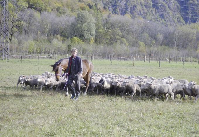 112-kim-et-moutons-et-d.jpg