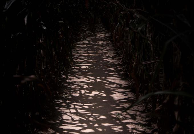 139-labyrinthe-vendee-vallee-nuit.jpg