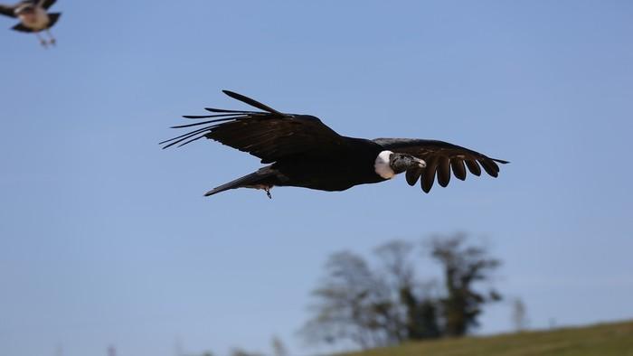 136-zooparc-beauval-oiseaux.jpg