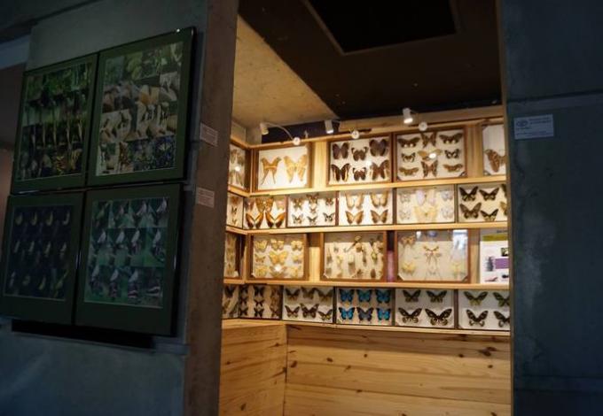 145-naturoptere-papillons.jpg
