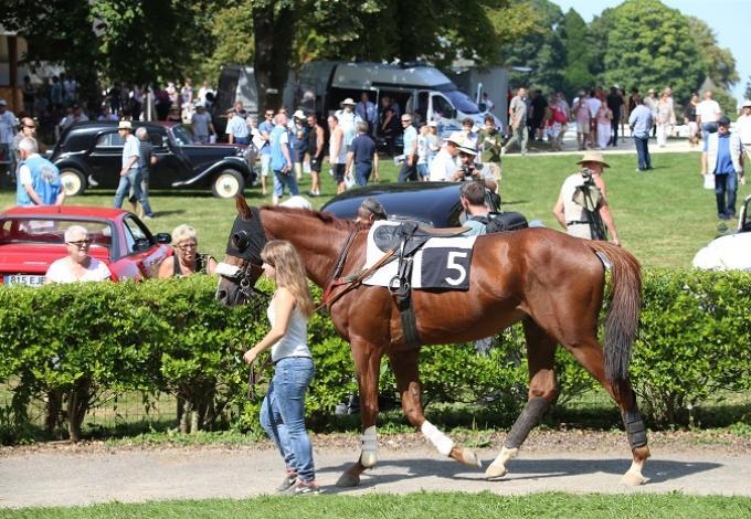 146-chateau_pompadour-correze_chevaux_course-concours_1.jpg