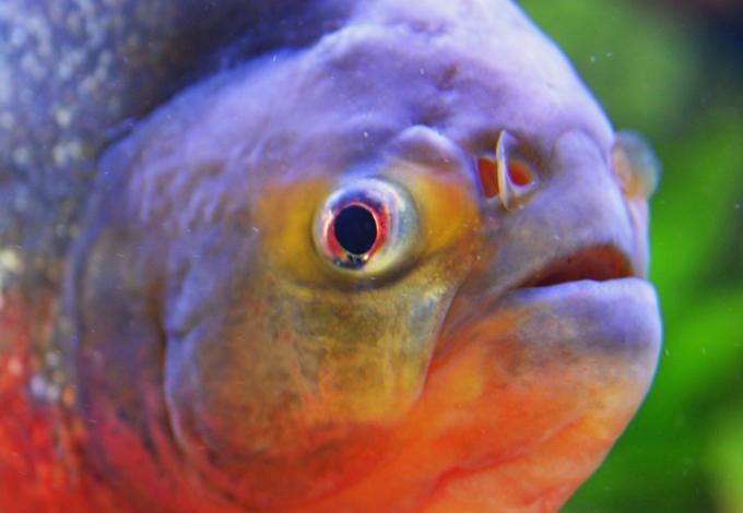 148-poissons_agos.jpg