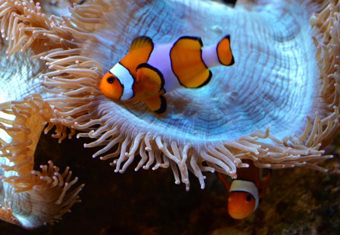 148-poissons_agos_-3.jpg
