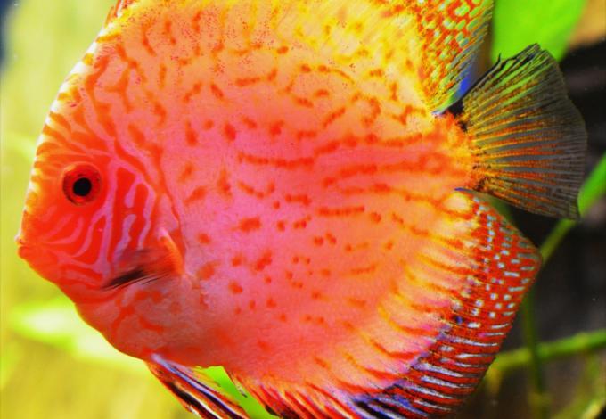 148-poissons_agos_2.jpg