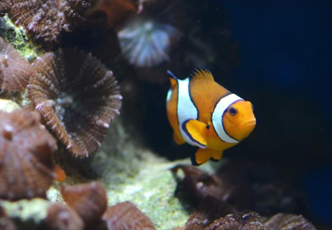 148-poissons_agos_5.jpg