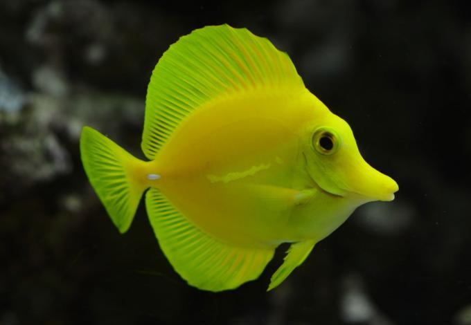 148-poissons_agos_7.jpg