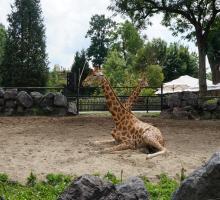 264-maubeuge_zoo.jpg