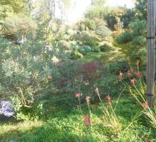 288-jardin-zen-beaumont-monteux.jpg