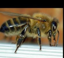 409-abeille-05.jpg