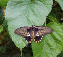 450-au-paradis-du-papillon.jpg