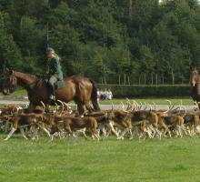 456-chasse_a_courre.jpg