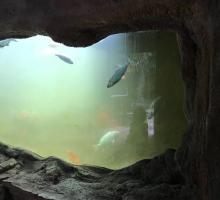 549-aquarium-du-perigord-noir.jpg