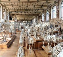668-galerie_de_paleontologie_et_d'anatomie_museum-d'histoire-naturelle-paris.jpg