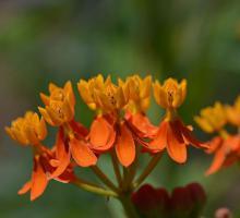 701-conservatoire-national-des-plantes-a-parfum.jpg