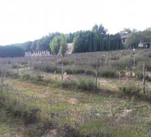 786-les-labyrinthes-de-hauterives-drome.jpg