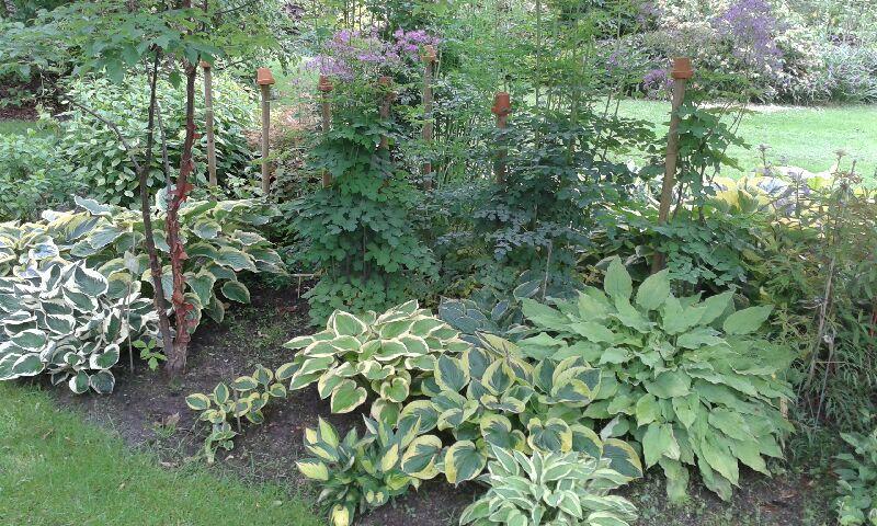 257-jardin-des-rondeaux.jpg