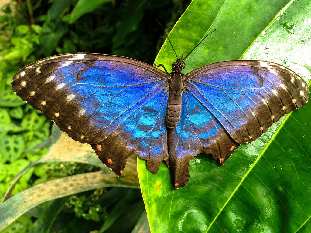 359-jardin-aux-papillons-vannes.jpg