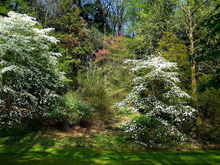 390-arboretum-de-la-fosse.jpg