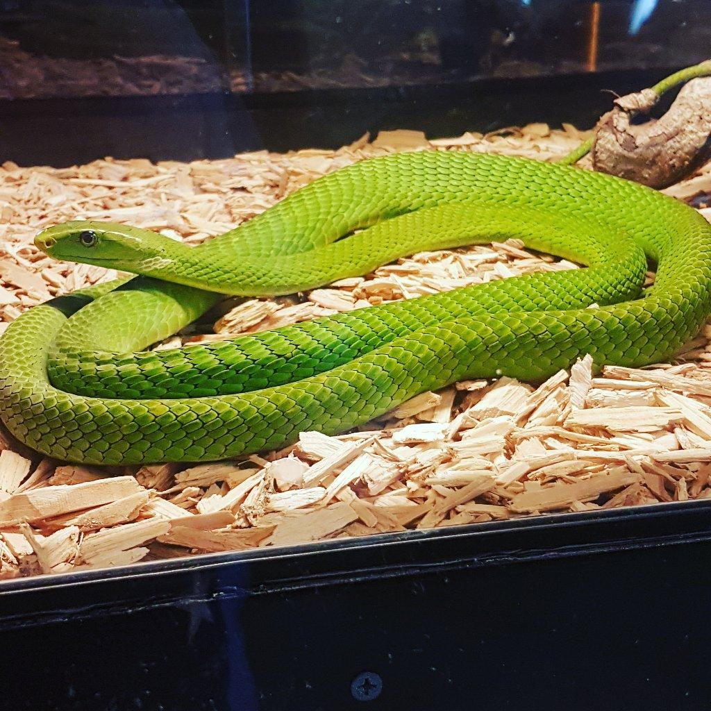 440-ferme-reptiles-09.jpg