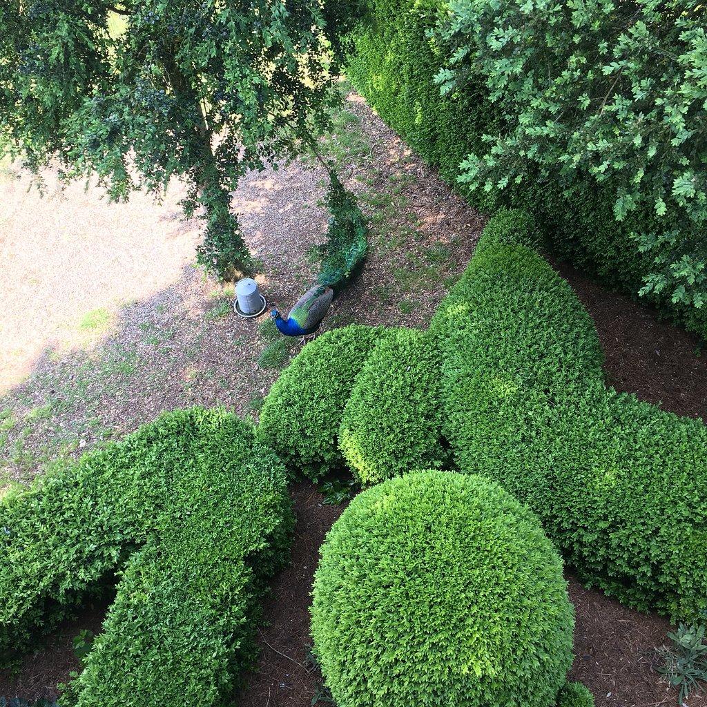 513-les-jardins-de-marqueyssac-vezac.jpg