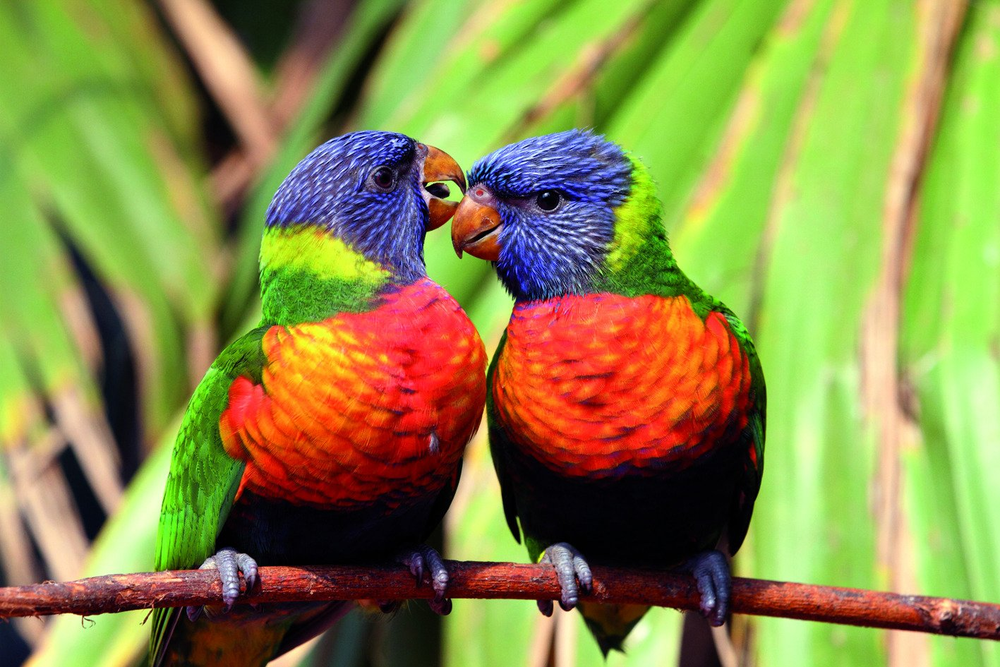 550-parc-des-oiseaux.jpg