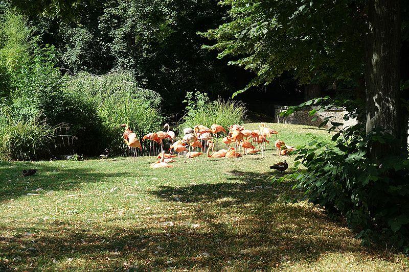 Zoo Du Jardin Des Plantes Billets Pas Chers Mytravelpass Com