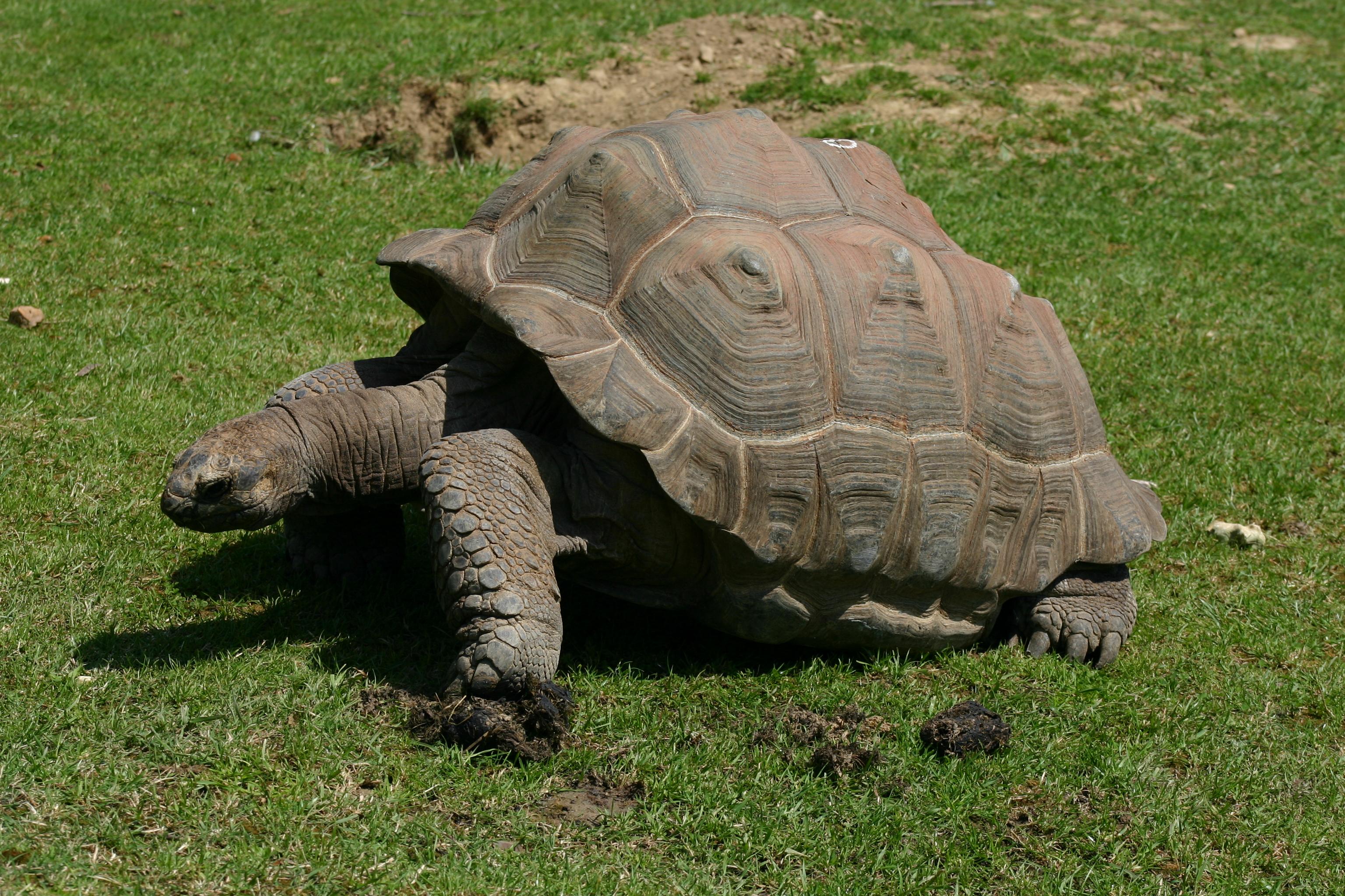 734-tortue-cite-des-tortues-a-cupulatta.jpg