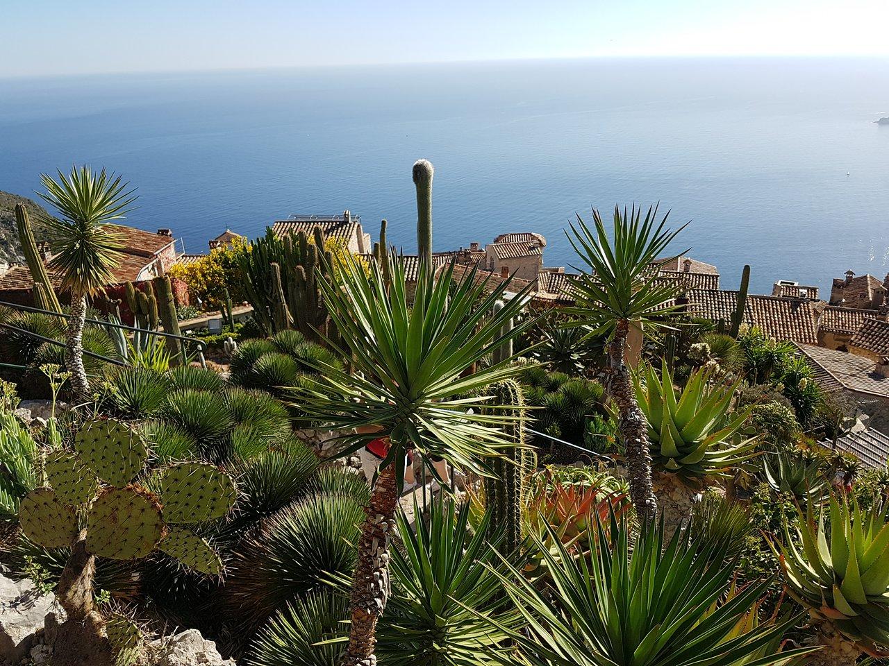 1139-jardin-exotique-eze-alpes-maritimes.jpg
