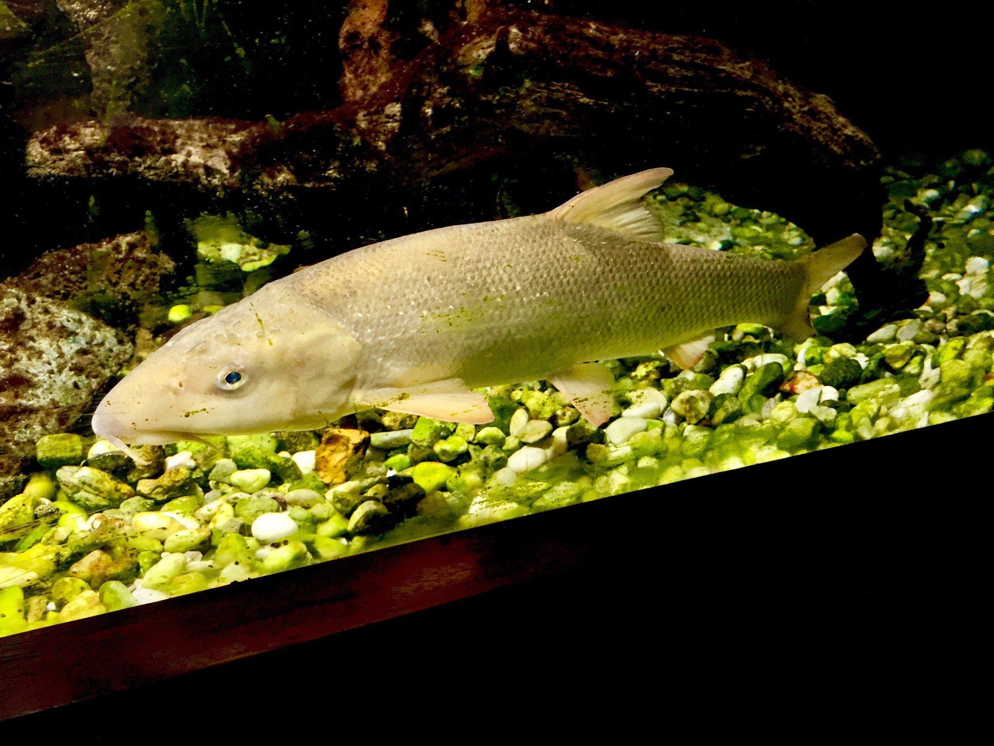 1411-aquarium-de-pescalis-moncoutant-deux-sevres-nouvelle-aquitaine.jpg