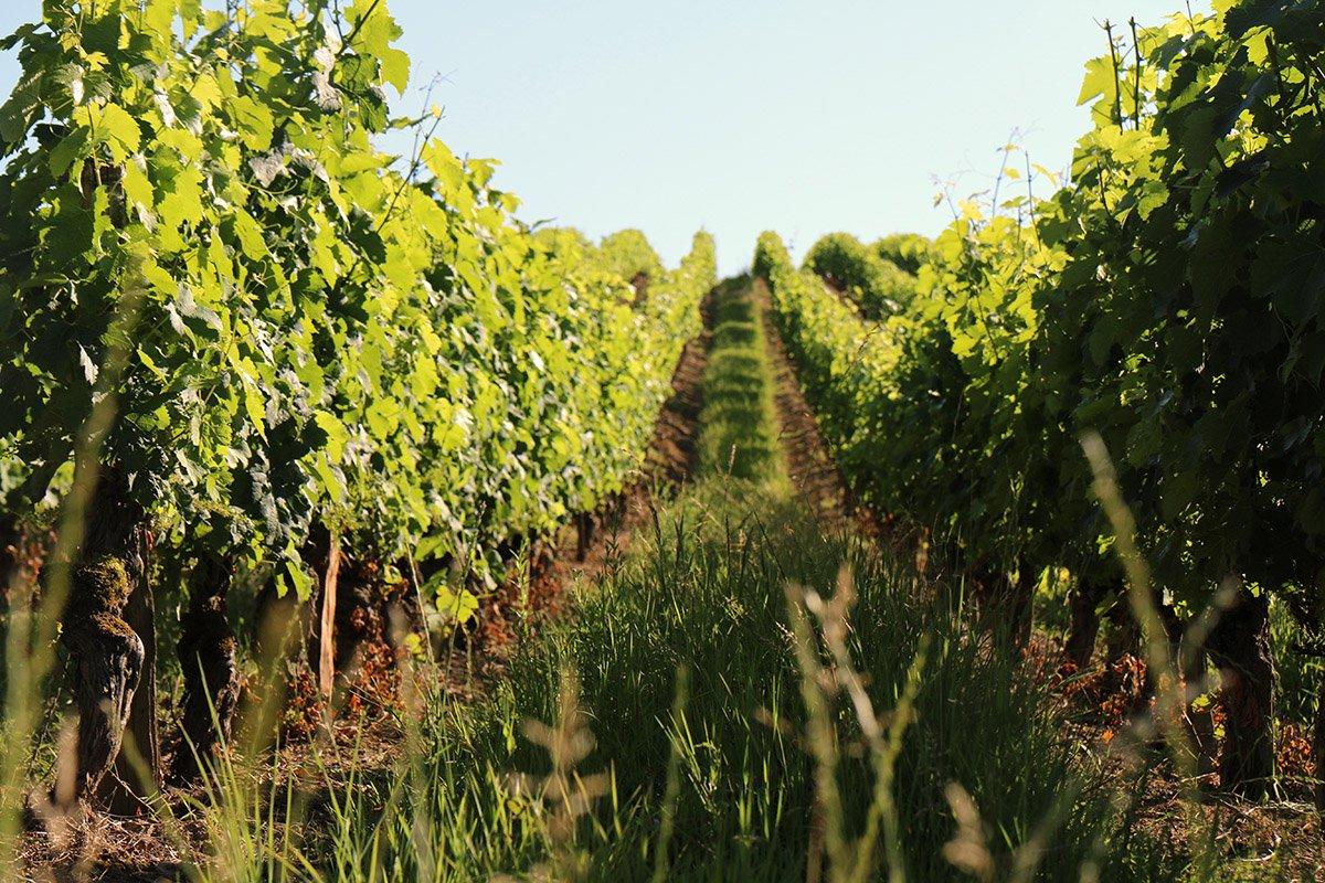 1443-les-vignerons-de-buzet-47.jpg