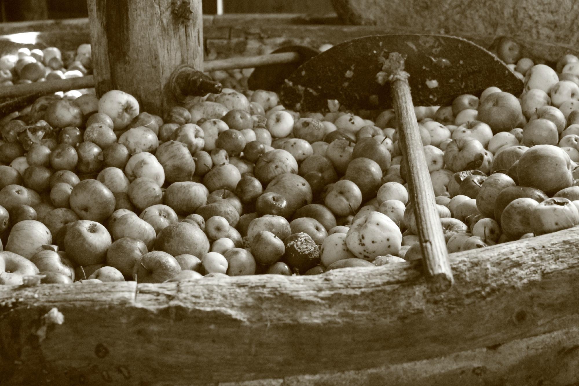 1460-musee-du-cidre-la-ferme-d-hotte-aube.jpg