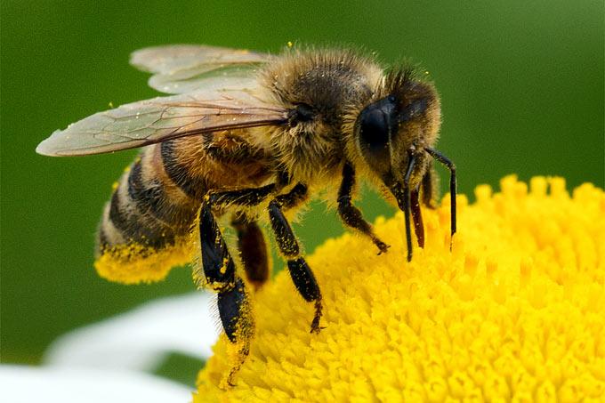 1645-ecomusee-de-l-abeille-aubonne-25.jpeg