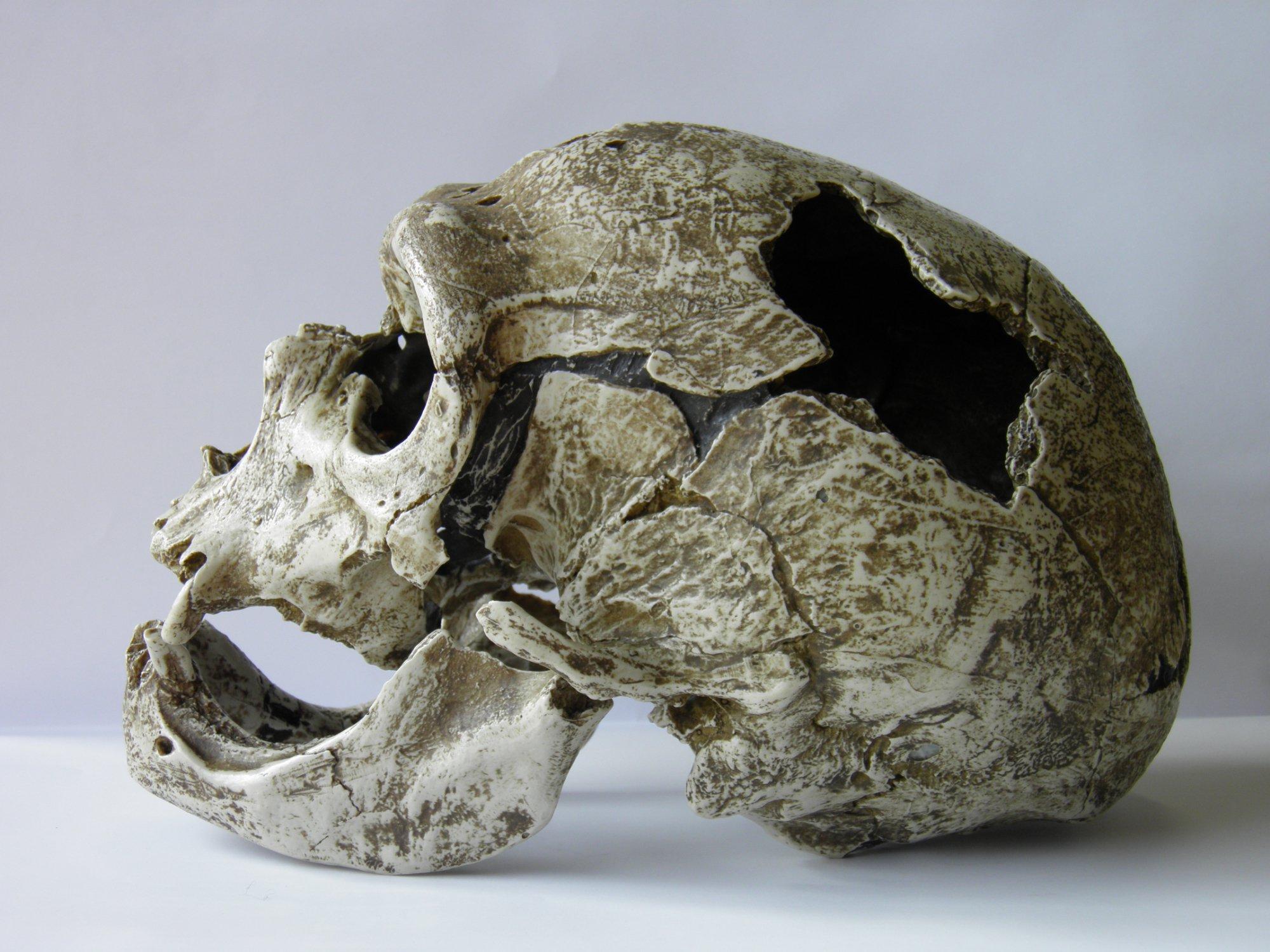 2025-musee-homme-de-neandertal-la-chapelle-aux-saints-correze.jpg