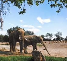 1004-reserve_africaine_de_sigean-aude.jpg