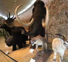 1021-musee-prehistoire-gorges-verdon.jpg