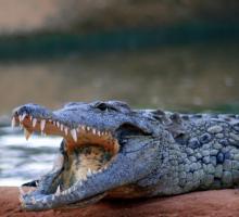 1160-ferme-aux-crocodiles-26.jpg