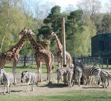 1166-zoo-thoiry-78.jpg