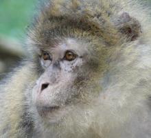 1168-terre-singes-77.jpg