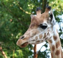 1173-zoo_des_sables.jpg