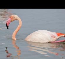 1190-parc-ornithologique-13.jpg