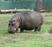 1225-zoo_arcachon_33.jpg
